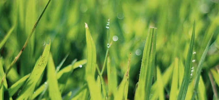 Rising Temps? Mow Your Grass Higher This Summer!