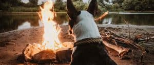 why-do-campsites-charge-for-dogs