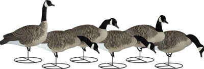Dakota Decoy Signature Series Mixed Canada Goose Decoys
