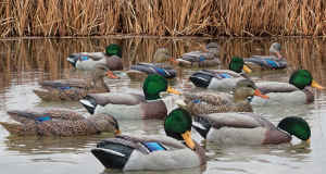 Avian-X Topflight Mallard Duck Decoys