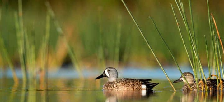 The Top 10 Items You Need for Waterfowl Hunting