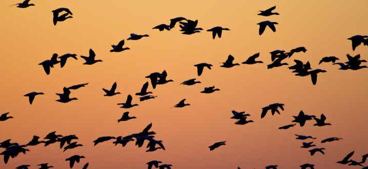 Status of Waterfowl 2018