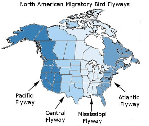 waterfowl-flyways-migratory