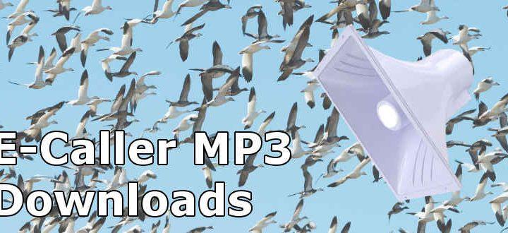 Snow Goose Sounds and MP3 E-Caller Tracks