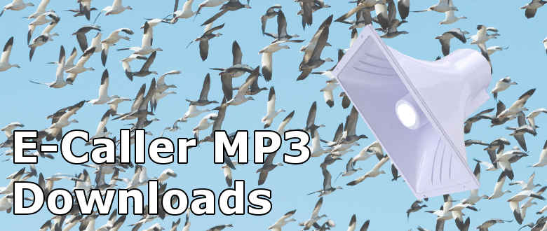 Snow Goose Sounds and MP3 E-Caller Tracks