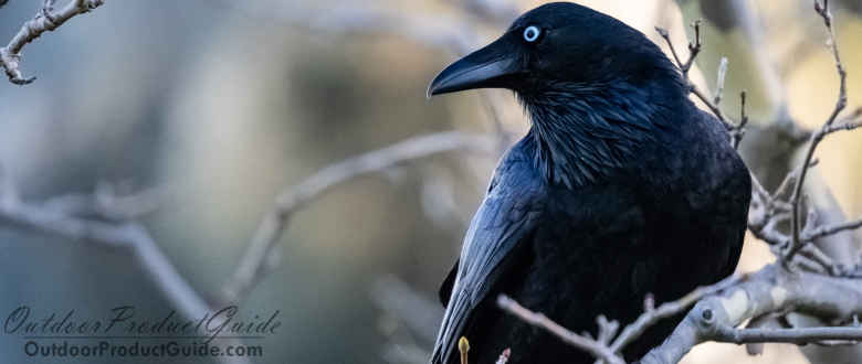 Best E-Caller for Crow Hunting: Our top picks