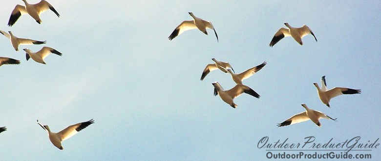 SOLVED: What is the best shot size for Snow Geese?