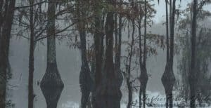 duck-hunting-in-the-rain