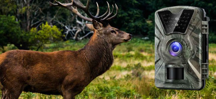 Top 3 Best Ways to Secure a Trail Camera