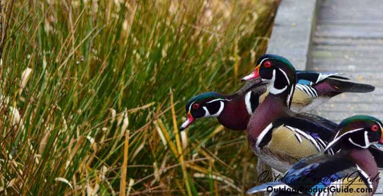 Best Crops to Plant for Ducks: Our top picks