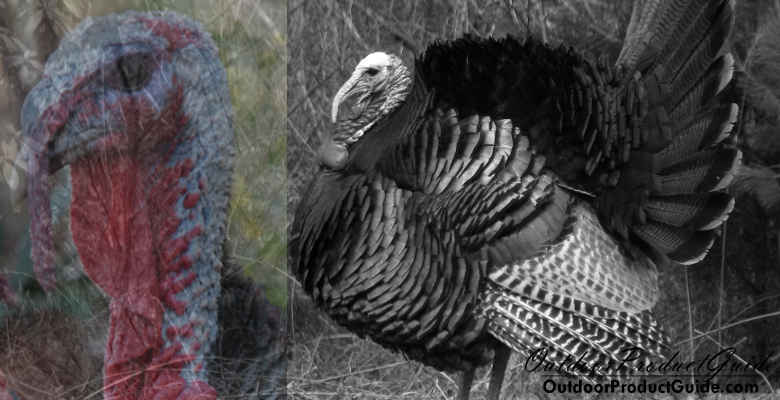 Top 6 Evening Turkey Hunting Tips