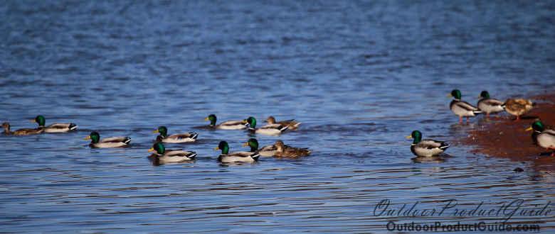 10 Tips for Hunting Dabbling Ducks