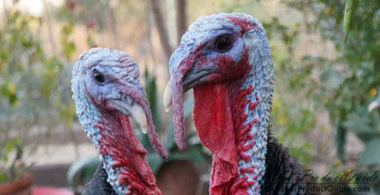 The 3 Best Turkey Chokes for the Mossberg 500