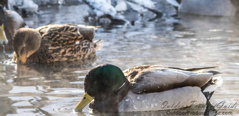 Duck Hunting in January: 5 Late Season Tips