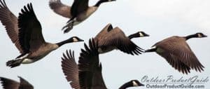 goose-flagging-systems