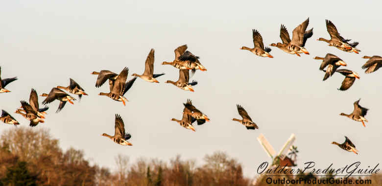 How to Hunt Geese on Big Water
