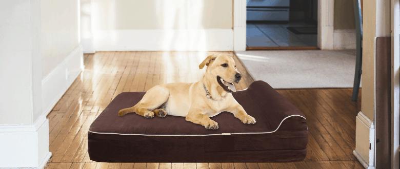 Best XXL Dog Beds 2022 – Buyer's Guide
